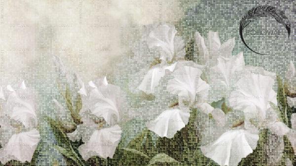 freska_Wezen_Bohowall_kelly