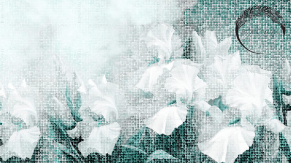 freska_Wezen_Bohowall_mint